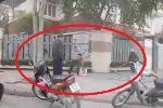Video: Hò nhau vây bắt nhím 'khổng lồ' trên phố Hà Nội