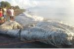 Video: Dân kinh hãi khi 'quái vật' khổng lồ đầy lông lá dạt vào bờ biển
