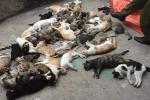 Công an truy tìm kẻ giết mèo hàng loạt ở Nam Định