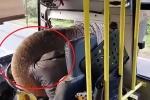Clip: Voi chặn đầu xe buýt cướp chuối khiến tài xế sợ 'mất mật'