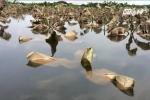 Nước ngập đến ngọn chuối, dân bãi giữa sông Hồng thấp thỏm mưu sinh