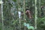 Lộ diện người cuối cùng của bộ lạc Amazon, sống sót cô độc hơn 20 năm trong rừng