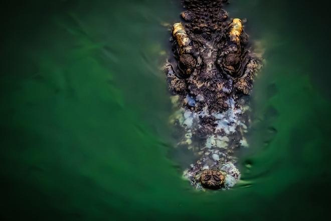 Giành lại thi thể ngư dân Indonesia trong hàm cá sấu - 1