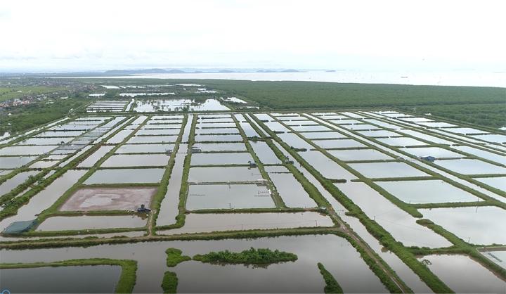 Gần 400ha đất bị bỏ quên ở Hải Phòng: Sở TN-MT vẫn 'im hơi lặng tiếng' - 2