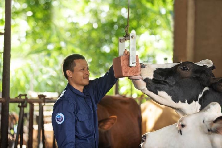 Cô Gái Hà Lan và hành trình kiến tạo giá trị cho ngành chăn nuôi bò sữa bền vững - 2