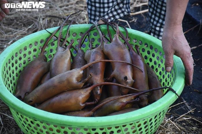Làng bắt chuột đồng ở Hải Dương ngày chính vụ làm đến đâu hết đến đấy - 15