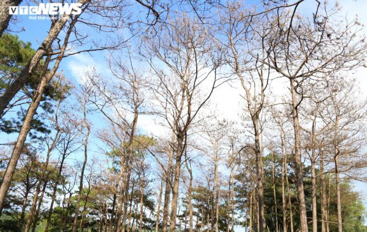 Rừng ở Đắk Glong bị tàn phá, lỗi do Huyện ủy thiếu quyết liệt - 1