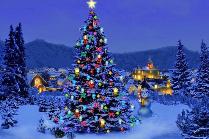 Cây thông Noel có nguồn gốc từ đâu? - 2