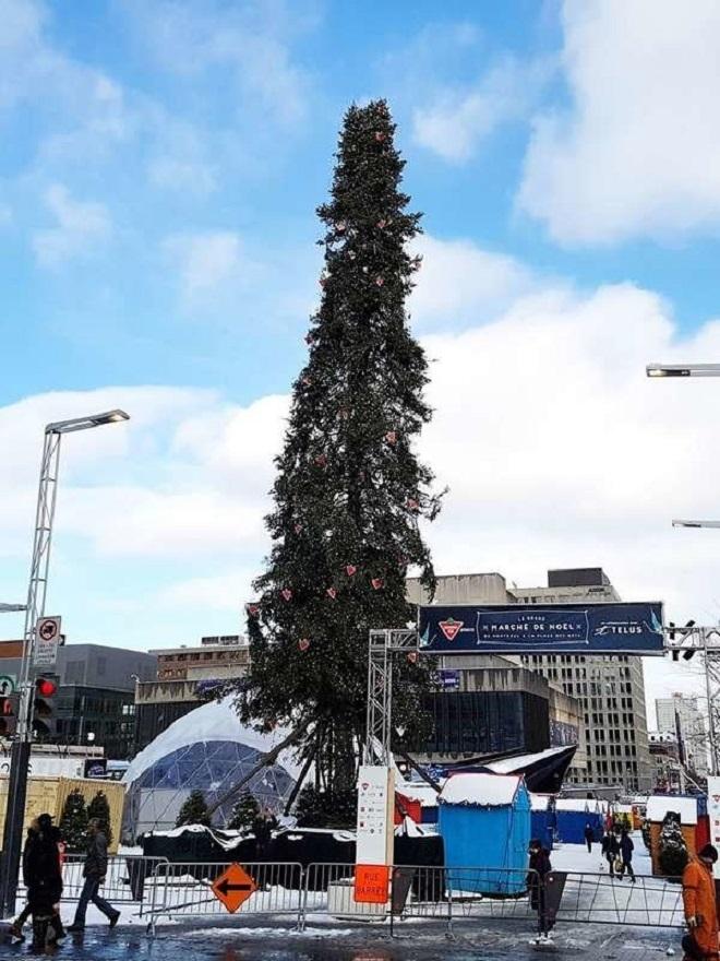 Chết cười xem những cây thông Noel xấu xí đến mức thảm họa - 5