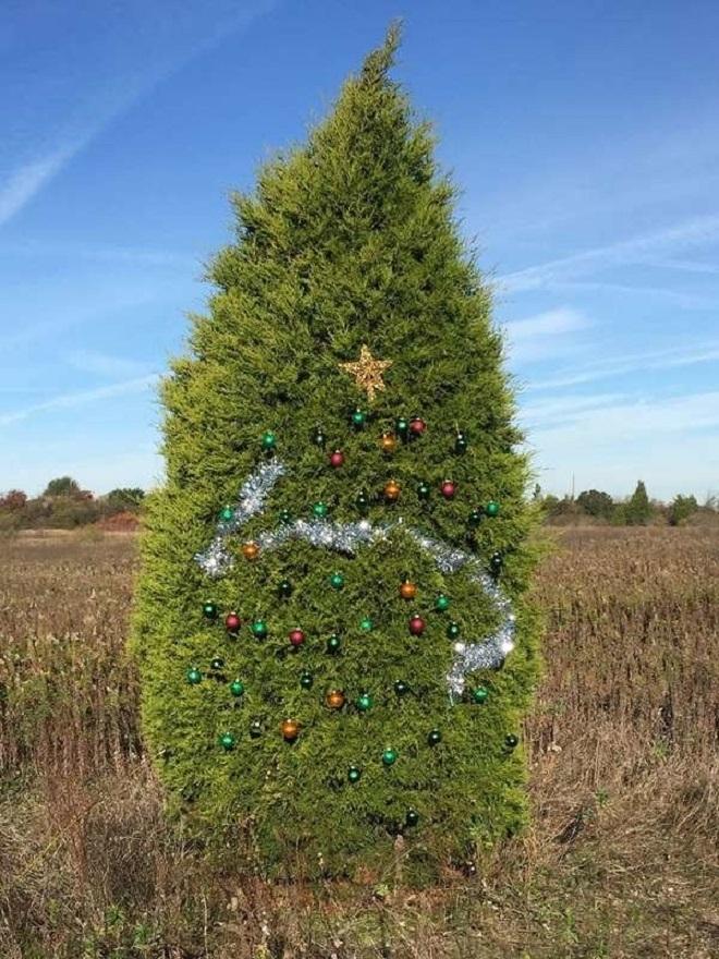 Chết cười xem những cây thông Noel xấu xí đến mức thảm họa - 7