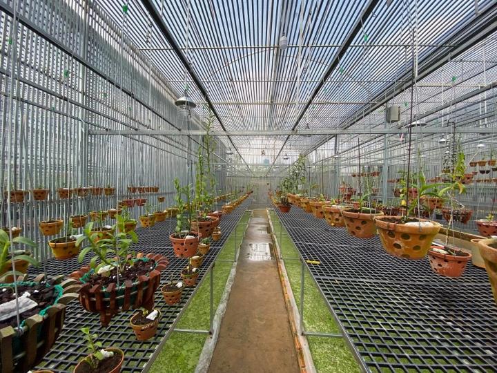 Đàm Rồng Nghệ – chàng trai 8X bỏ kinh doanh để nuôi trồng hoa lan - 4