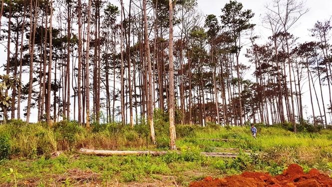 Để mất rừng, 6 tập thể và 119 cá nhân ở Lâm Đồng bị kỷ luật - 1