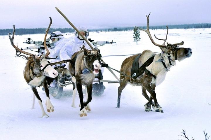 طبق گفته روسیه ، ارتش نروژ قصد دارد از گوزن به عنوان وسیله ای برای جنگ استفاده کند - 1