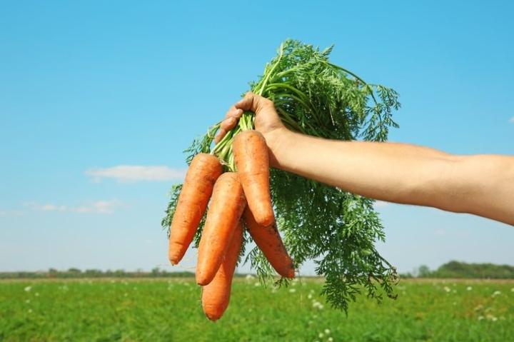 Thực phẩm giúp giải độc, làm sạch cơ thể hiệu quả - 8