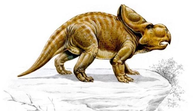 Công cụ đặc biệt loài khủng long cổ dùng để tán tỉnh bạn tình