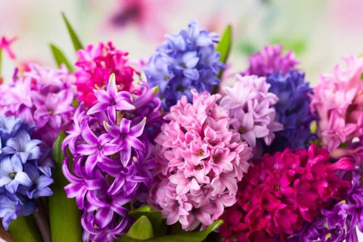 'Bật mí' bất ngờ về ý nghĩa của các loài hoa - 11