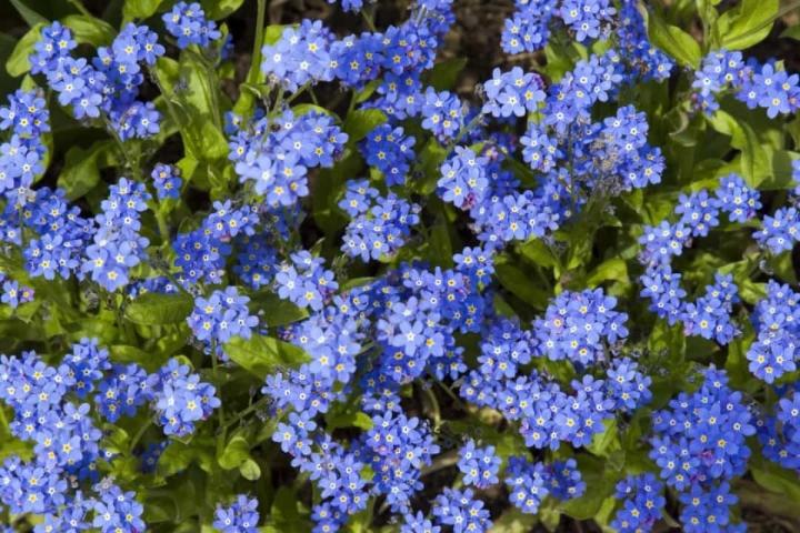 'Bật mí' bất ngờ về ý nghĩa của các loài hoa - 7