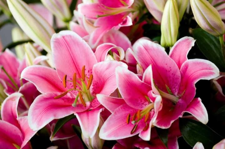 'Bật mí' bất ngờ về ý nghĩa của các loài hoa - 8