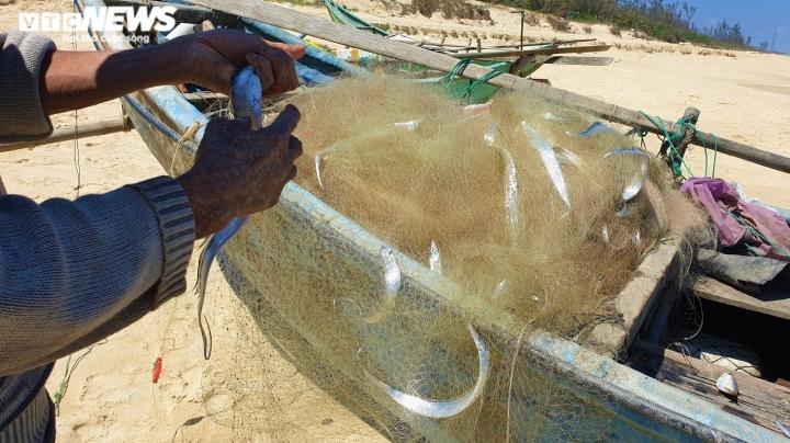 Ảnh: Vươn khơi trúng đậm cá hố, ngư dân Quảng Nam thu bạc triệu mỗi ngày - 2