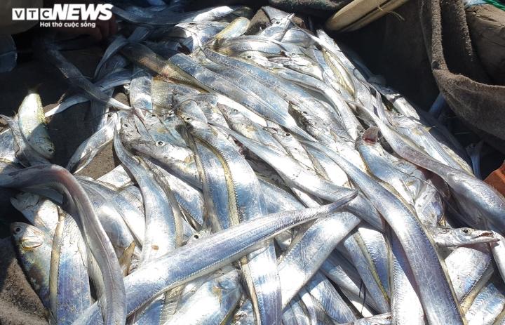 Ảnh: Vươn khơi trúng đậm cá hố, ngư dân Quảng Nam thu bạc triệu mỗi ngày - 4