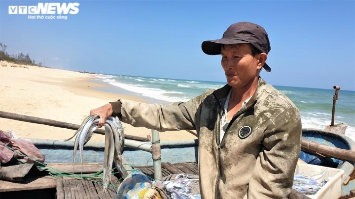 Ảnh: Vươn khơi trúng đậm cá hố, ngư dân Quảng Nam thu bạc triệu mỗi ngày - 3