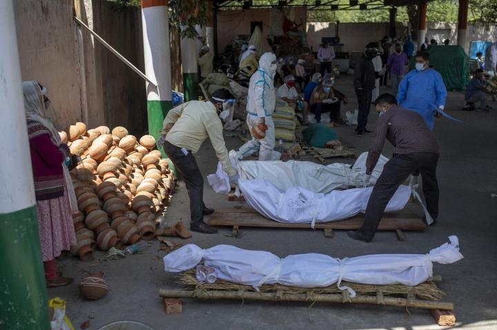Ấn Độ chặt cây trong công viên, lấy củi hoả táng bệnh nhân COVID-19 - 4