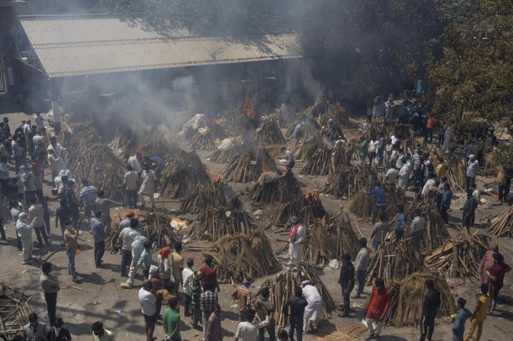 Ấn Độ chặt cây trong công viên, lấy củi hoả táng bệnh nhân COVID-19 - 2