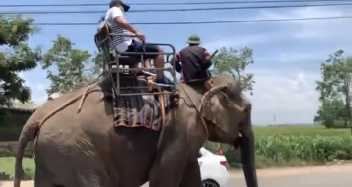 Nhiều người bức xúc khi voi Tây Nguyên bị vắt kiệt sức, oằn lưng chở du khách - 1
