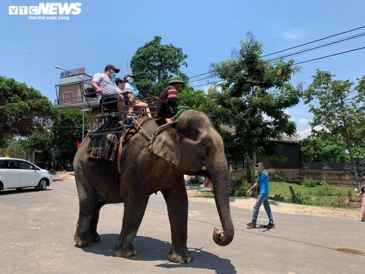 Nhiều người bức xúc khi voi Tây Nguyên bị vắt kiệt sức, oằn lưng chở du khách - 2