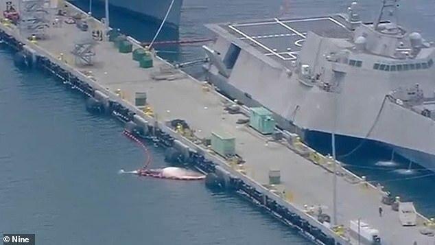Mẹ con cá voi nằm chết dưới thân tàu chiến