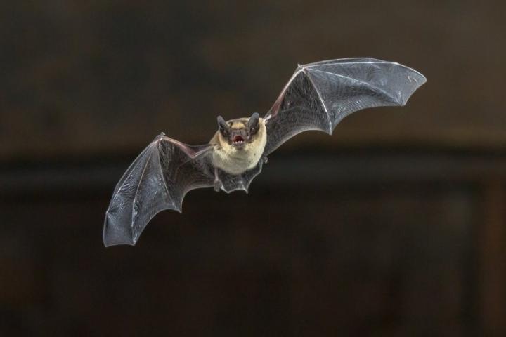 آزمایشگاه ووهان ابتدا جزئیات مربوط به ویروس های خفاش را فاش کرد - 1
