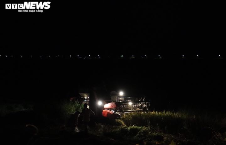 Ảnh: Tránh nắng 'như thiêu như đốt', nông dân Quảng Bình gặt lúa xuyên đêm - 9