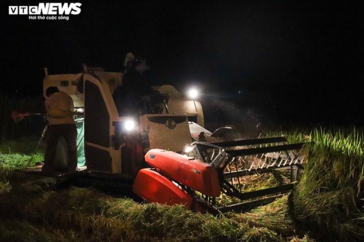 Ảnh: Tránh nắng 'như thiêu như đốt', nông dân Quảng Bình gặt lúa xuyên đêm - 3