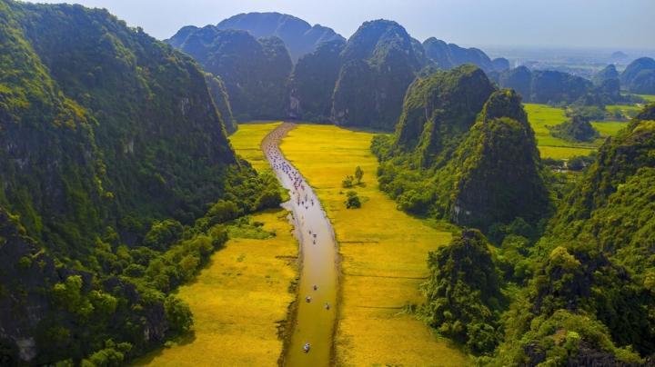Mơ màng giữa sắc vàng thơ mộng của cánh đồng 'đẹp nhất Việt Nam' mùa lúa chín  - 2