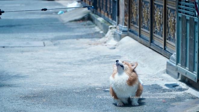 Chú chó được phun khử khuẩn ở Gò Vấp bỗng nổi tiếng trên mạng - 1