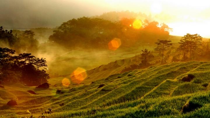 Tìm về chốn bình yên ở Thanh Hóa, mùa lúa chín ngả màu như 'biển vàng' - 4