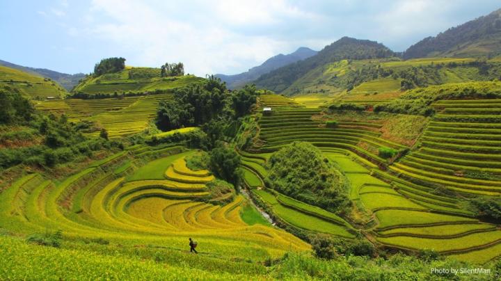 Tìm về chốn bình yên ở Thanh Hóa, mùa lúa chín ngả màu như 'biển vàng' - 3