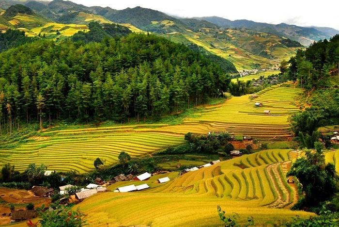 Tìm về chốn bình yên ở Thanh Hóa, mùa lúa chín ngả màu như 'biển vàng' - 2