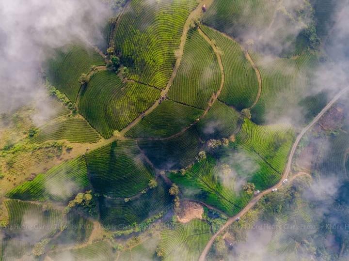 Ốc đảo chè ẩn hiện giữa biển mây: Cảnh sắc 'cực phẩm' chỉ có ở đất Tổ Phú Thọ - 3