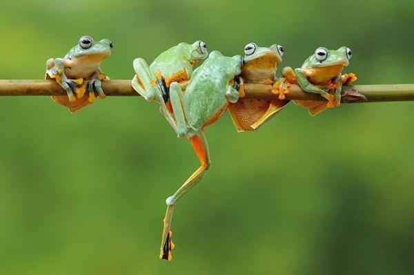 Người đàn ông nuốt sống 5 con ếch để chữa bệnh và kết cục thảm hại