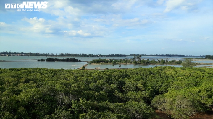 Ảnh: Vẻ đẹp hút hồn rừng ngập mặn duy nhất trên vùng đầm phá lớn nhất Đông Nam Á - 1