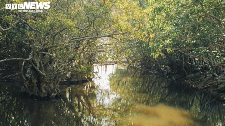 Ảnh: Vẻ đẹp hút hồn rừng ngập mặn duy nhất trên vùng đầm phá lớn nhất Đông Nam Á - 4
