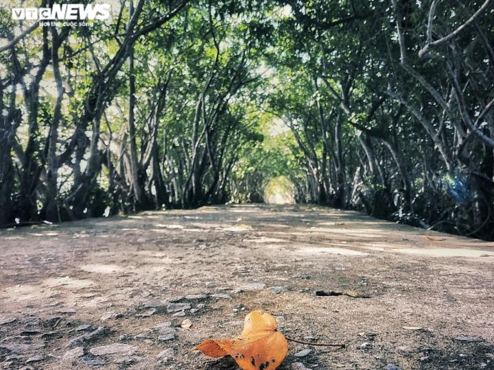 Ảnh: Vẻ đẹp hút hồn rừng ngập mặn duy nhất trên vùng đầm phá lớn nhất Đông Nam Á - 7
