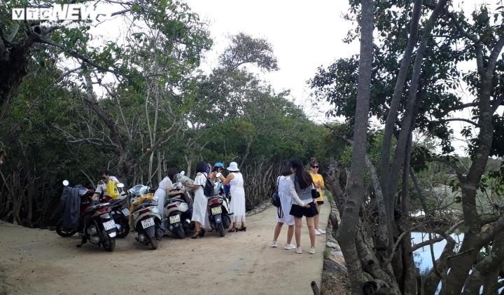 Ảnh: Vẻ đẹp hút hồn rừng ngập mặn duy nhất trên vùng đầm phá lớn nhất Đông Nam Á - 2