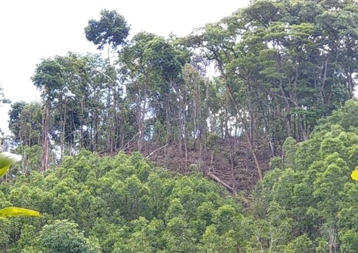 Đất rừng tự nhiên ở Thừa Thiên – Huế bị 'hô biến' thành đất trồng keo thế nào? - 1