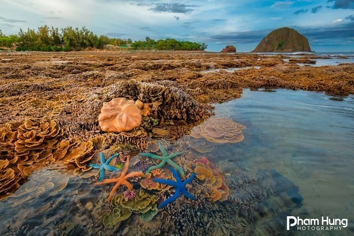 Hòn đảo xinh đẹp ở Phú Yên - nơi thỏa sức ngắm san hô mà không cần lặn biển - 6