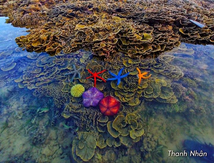 Hòn đảo xinh đẹp ở Phú Yên - nơi thỏa sức ngắm san hô mà không cần lặn biển - 2