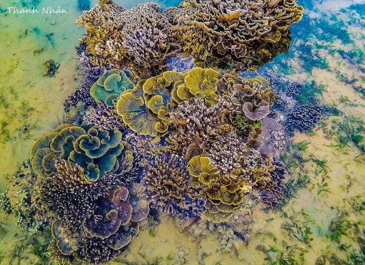 Hòn đảo xinh đẹp ở Phú Yên - nơi thỏa sức ngắm san hô mà không cần lặn biển - 3