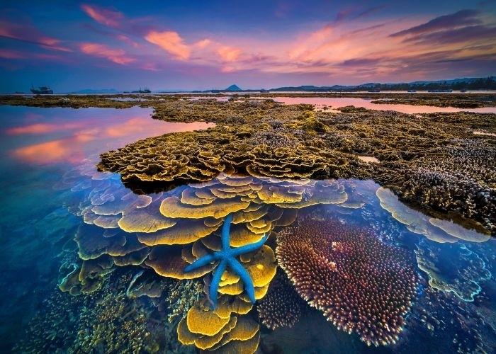 Hòn đảo xinh đẹp ở Phú Yên - nơi thỏa sức ngắm san hô mà không cần lặn biển - 4