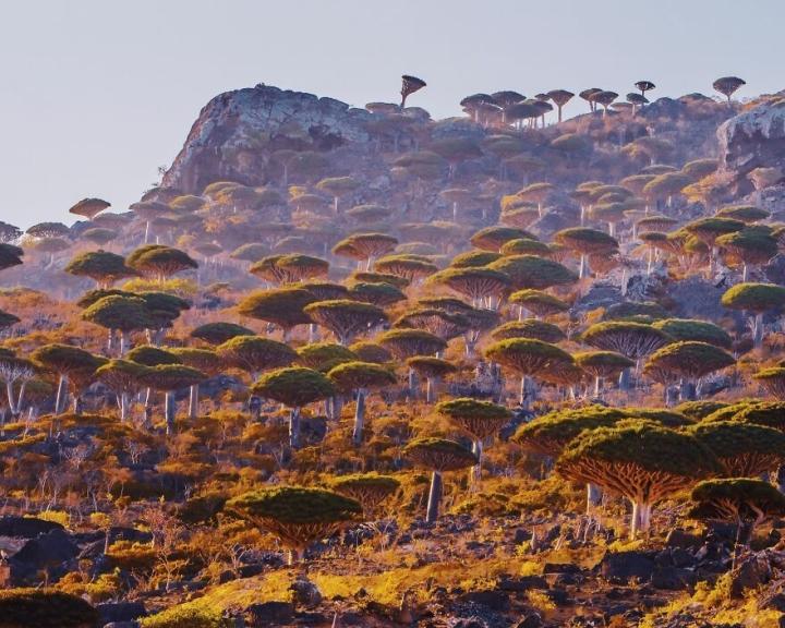 Du hí hòn đảo kỳ lạ nhất hành tinh, mỗi bước chân như lạc vào thế giới khác - 3
